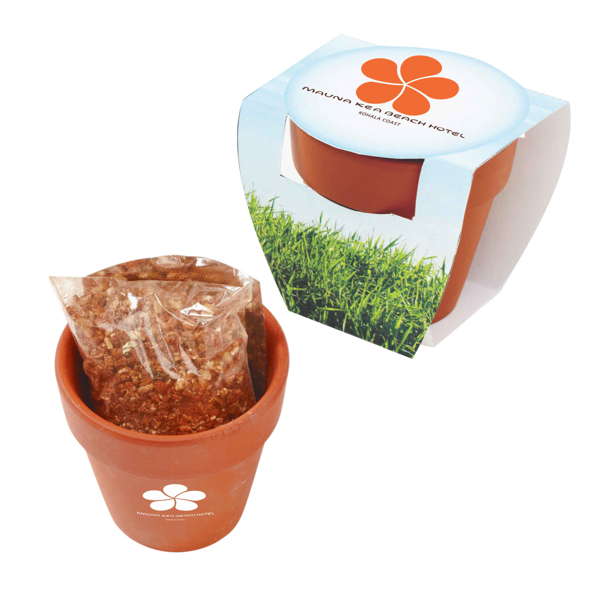Seed Sensations Terracotta Pot