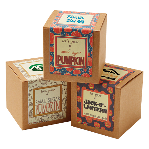Small Sugar Pumpkin Growables Planter in Kraft Gift Box